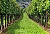 Benefits Of Organic Wine